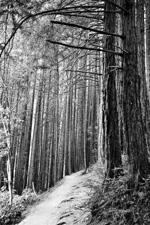 Sentier de Muir Woods