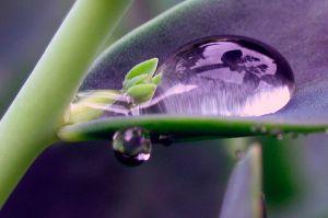 Trompe-l'oeil (iris-d'eau)