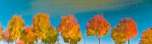 Reflets roux